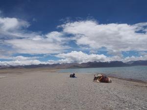 Tibetan man with his yak  at Yangpachen, Namtso